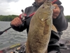 Joe Alfe Smallmouth Bass