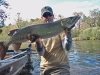 Small river Muskellunge
