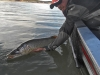 Fish Enchantment Guides, New Mexico Tiger Muskies