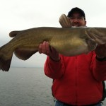 Whiskered Warriors: Natural Lakes Channel Catfish