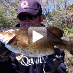 Postfrontal Smallmouth Bass