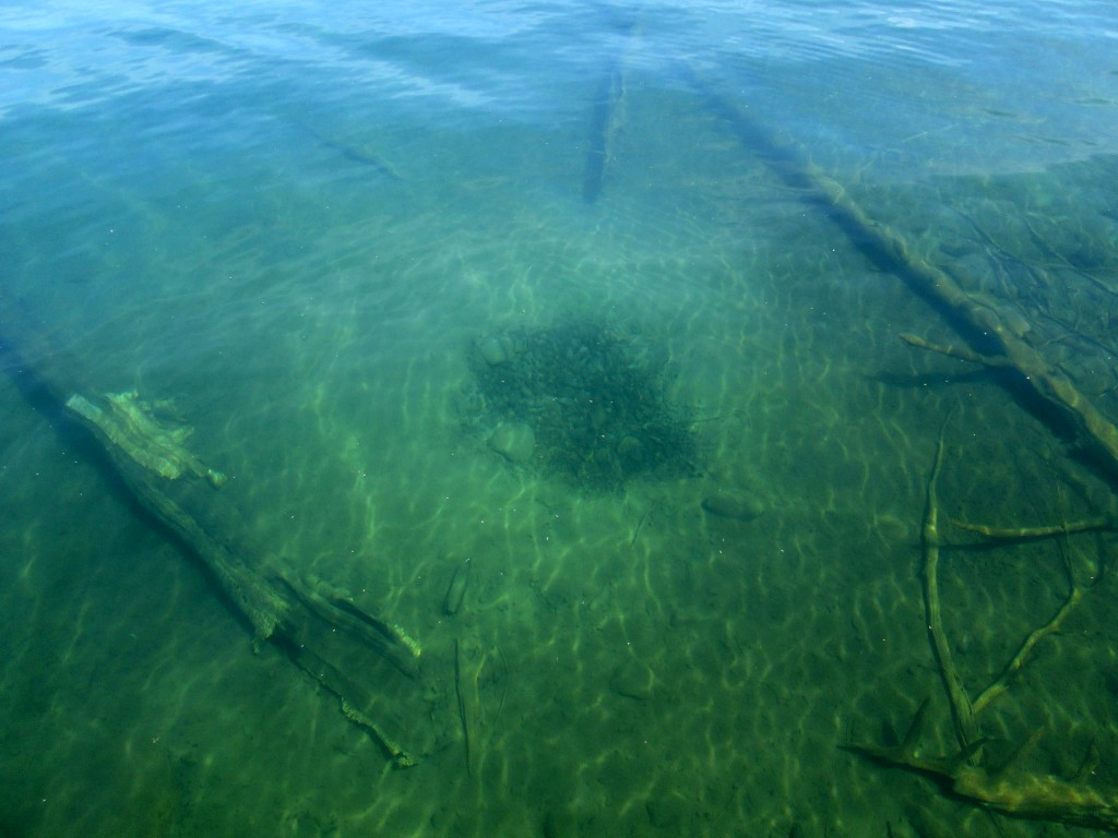 Clarity for bass in clear waters andrew ragas fishing for Bed fishing for bass